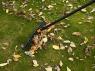 Насадка-грабли для сбора листвы QuikFit 1000656 (135514) - фото