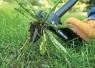 Грабли для удаления сорняков 139910 - фото